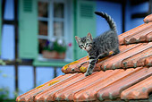 CAT 03 KH0058 01