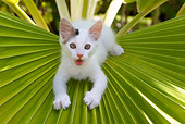 CAT 03 KH0060 01