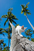 CAT 03 KH0062 01