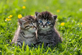 CAT 03 KH0067 01