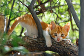 CAT 03 KH0072 01