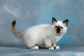 CAT 03 KH0080 01