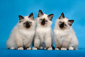 CAT 03 KH0085 01
