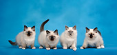 CAT 03 KH0088 01