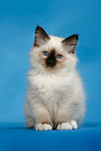 CAT 03 KH0089 01