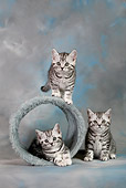CAT 03 KH0093 01