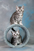 CAT 03 KH0094 01