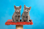 CAT 03 KH0098 01