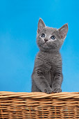 CAT 03 KH0102 01