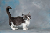CAT 03 KH0103 01