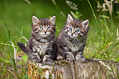 CAT 03 KH0243 01