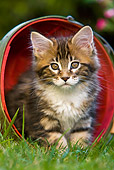 CAT 03 KH0244 01