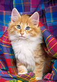 CAT 03 KH0254 01