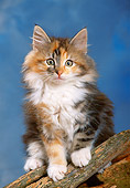 CAT 03 KH0255 01