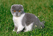 CAT 03 KH0257 01