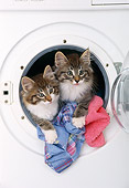 CAT 03 KH0262 01