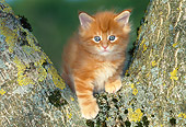 CAT 03 KH0263 01