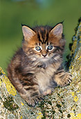 CAT 03 KH0264 01