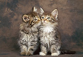 CAT 03 KH0267 01