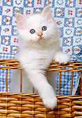 CAT 03 KH0271 01