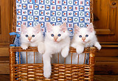 CAT 03 KH0273 01