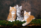 CAT 03 KH0276 01