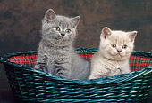 CAT 03 KH0277 01