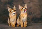CAT 03 KH0281 01
