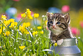 CAT 03 KH0286 01