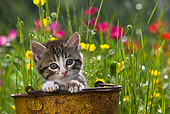 CAT 03 KH0288 01