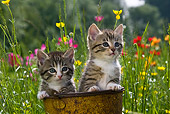CAT 03 KH0289 01