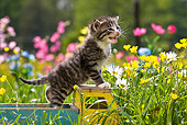 CAT 03 KH0292 01