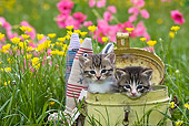CAT 03 KH0293 01