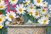 CAT 03 KH0294 01
