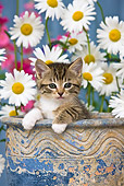 CAT 03 KH0295 01