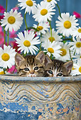 CAT 03 KH0296 01