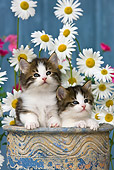 CAT 03 KH0297 01
