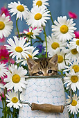 CAT 03 KH0299 01