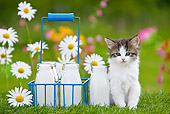CAT 03 KH0310 01