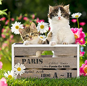 CAT 03 KH0315 01