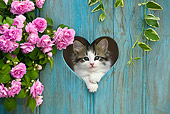 CAT 03 KH0317 01