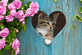 CAT 03 KH0318 01