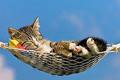 CAT 03 KH0322 01
