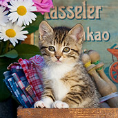 CAT 03 KH0323 01