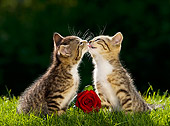 CAT 03 KH0330 01