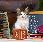 CAT 03 KH0340 01