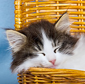 CAT 03 KH0347 01