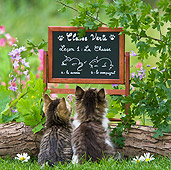 CAT 03 KH0349 01