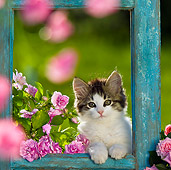 CAT 03 KH0368 01