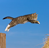 CAT 03 KH0372 01